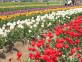 50万人が訪れるチューリップ祭りで有名なリバーサイドパークが近くです☆